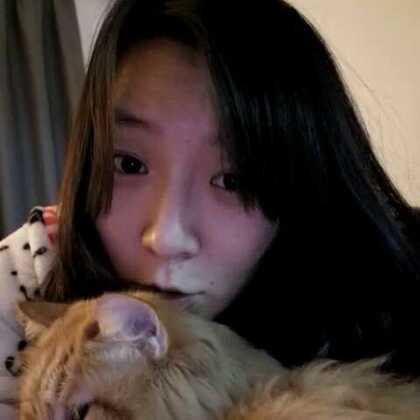 #喵的日常#当人趴在猫头上的时候它是什么表情?