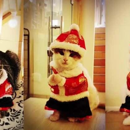 #宠物##新年#幸运土猫及喵语节目组携全体喵演员祝大家新年好!感谢各位在羊年与我们相知相伴!猴年咱继续猴开心!猴快乐!每天过的猴赛雷!