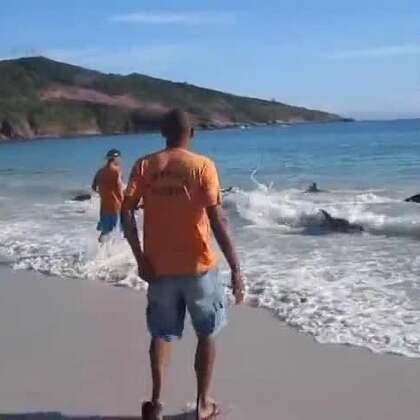 他只想拍海滩和海浪,沒想到却意外拍下这惊人的一幕。一群海豚竟这样出现在他面前!接下来发生的的事令人···