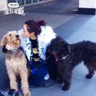 纽约街头偶遇两只炒鸡可爱的狗狗!!!#温雅纽约时装周#