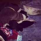 分享一只会呼噜的🐶 #随手美拍##宠物狗狗#