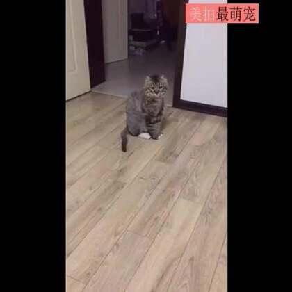 #宠物#养猫千日用猫一时,这主人也是懒出屁了。。😂