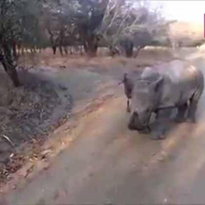 #宠物#犀牛宝宝跟小羊学走路的视频……看完了,动作没毛病,就是体重有瑕疵。。😂😂