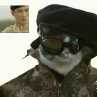 萌猫cos《太阳的后裔》,竟比原片还好看啊! #喵星人抢不到#