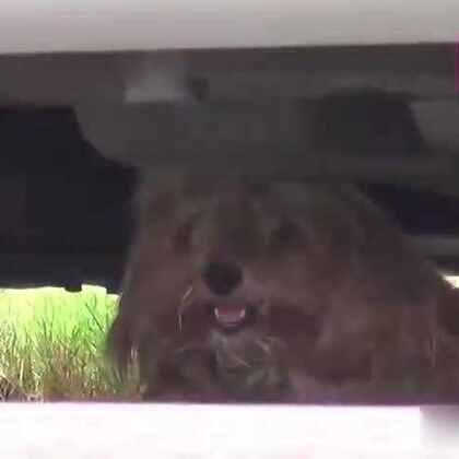 #宠物#一只流落街头极度害怕人类的流浪狗狗,在遇到这些有爱的义工之后,慢慢改头换面成为了一只洋溢着幸福的小可爱,希望能一直幸福下去!💘