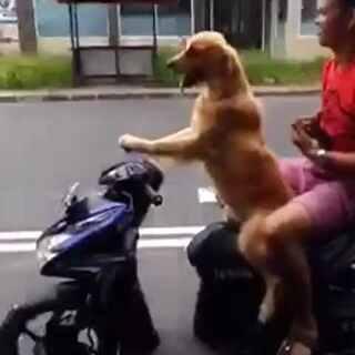 #模仿小胖大赛##热门#牛逼的狗狗