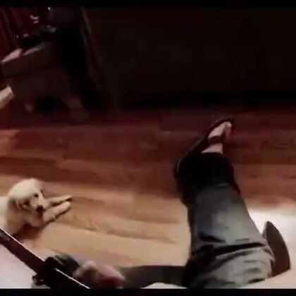 #宠物#外国网友Andal喜欢弹吉他,而每次当他拿起吉他拨动琴弦时,家里的小金毛Hudson就会走过来靠在主人腿边,认真的欣赏着主人弹奏的音乐。[心]有这么个软萌的小听众,感觉好治愈!