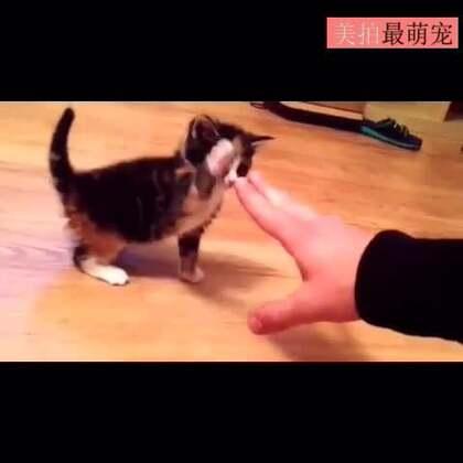 #宠物#史上最弱的猫猫拳,好萌!😍😍