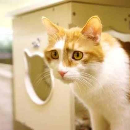 #宠物##养猫#我家的猫挠沙发!咋解决?今天喵语就来说说猫为啥非跟沙发过不去,以及咋样让我(尽量)不挠沙发!幸运土猫和喵语依然感谢每一个关心流浪猫公益,爱猫并且愿意尝试懂猫的你们哦~