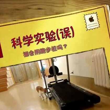 有捐赠人给土猫场所捐来了一个跑步机,本来想着让场所几个过重的孩子减减肥...然而...他们好像不太能理解这是啥玩意...#宠物##猫#