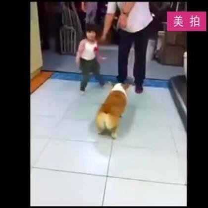 #宠物#电动马达臀哈哈😂😂