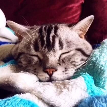 一个故事#宠物#@nG家的猫