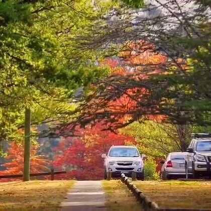 #旅行##秋天#秋天的童话