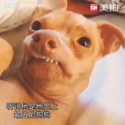 大家都在比美,宠物来比丑啦!其实你们不丑不丑!你们是丑萌!快来参加#宠物比丑大赛#吧~把你觉得宠物最丑的样子拍下来~ 更多爆笑可爱萌宠,请到#宠物#频道哦~