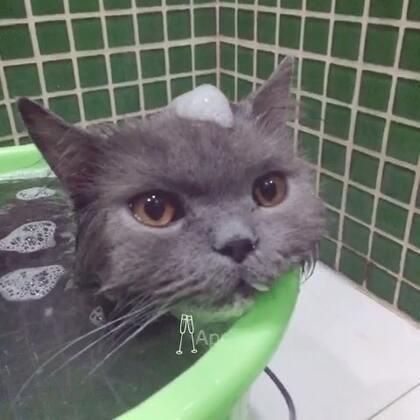 洗猫日❤多总已经彻底认命哈哈哈毫不反抗