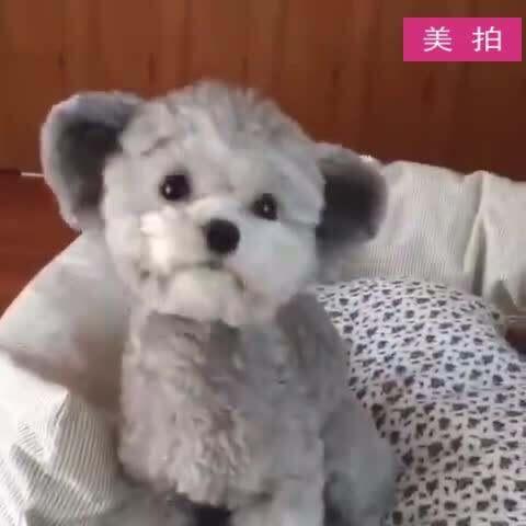 【最萌宠美拍】#宠物#太萌了太萌了,看了好几遍...