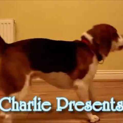 【最萌宠美拍】#宠物#国外一母亲记录狗狗照顾自...