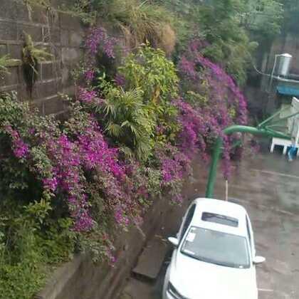 轻松学校的花和树😄雨后,清新,周一👼