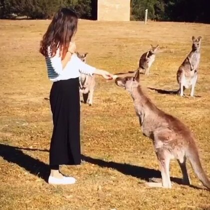 #旅行##澳洲##旅画映像#凑近点,再近点……