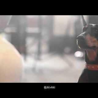 #明年今日照样爱##520##男神#有时候,狗比人更懂,陪伴是最长情的告白。#宠物#