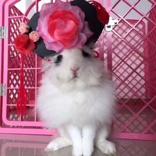 大熊:皇上,你还记得大明湖畔的夏雨荷吗😂#美拍首届萌宠大赛##兔子##宠物兔子##还珠格格##恶搞还珠格格大赛#
