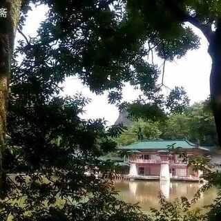 再不来伤春悲秋,夏日就真的真的来了……#触手可及的夏季##寂静的树林#