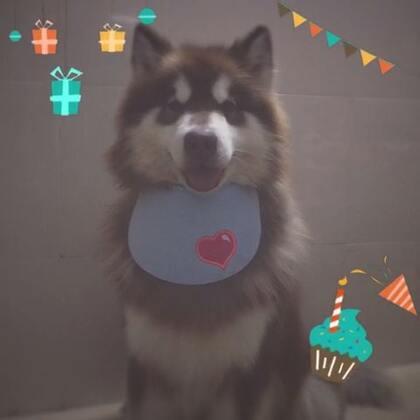 祝我的大毛球生日快乐,健健康康。#宠物##球球崽崽#