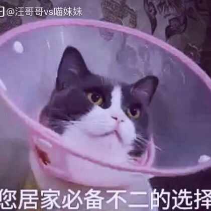 快来围观喵妹的喇叭花牌信号接收器📡!喵妹表示整个喵都不好了😂😂笑了请点赞哦😝#宠物##喵妹爱呲牙#