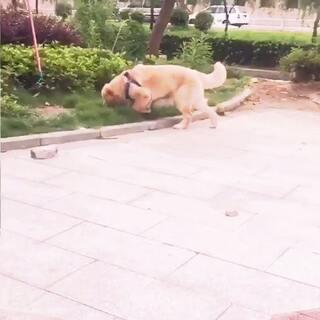 #宠物慢动作大赛#