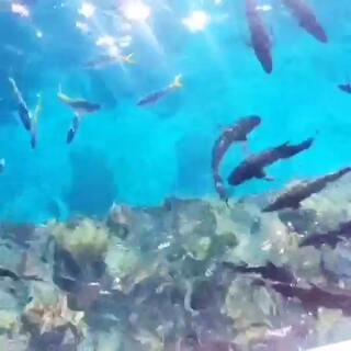 大堡礁的鱼儿们 🐟🐟🐠🐠#澳大利亚大堡礁##凯恩斯大堡礁#