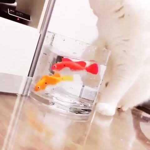 【最萌宠美拍】#宠物#假装在吃鱼🙈
