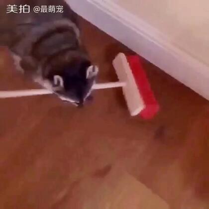 #宠物#这卫生打扫的没谁了🙈