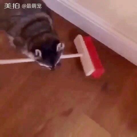 【最萌宠美拍】#宠物#这卫生打扫的没谁了🙈