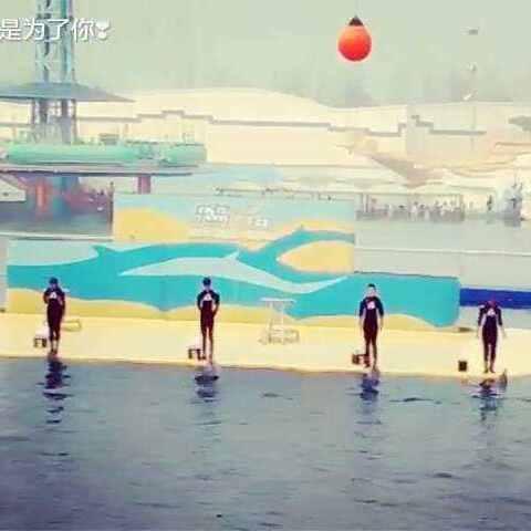 海豚表演##可爱海豚##秦皇岛乐岛海洋公园#海豚表演