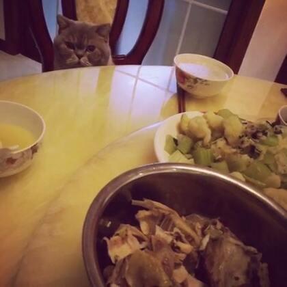 一只等待开饭的😺