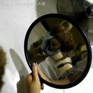 #小奔vs大奔##宠物照镜子#