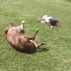 #宠物#你陪我玩耍,我陪你长大😍