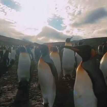 法属克洛泽群岛,坐落于印度洋中,处于南极圈以下。它也是世界上最后未被人类触及的地区之一。全面禁止核试验组织的一个小组正在准备在此安装水下传音基站。这个地区的偏远状况,严苛多变的气候环境,以及凹凸不平的水滴型态都是使得这项工程变成史上最艰难的水下传音基站安装工作。
