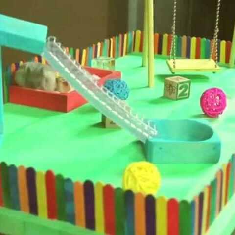 主人给小仓鼠做了个游乐场,胖墩墩的仓鼠上去就会玩,太有爱了