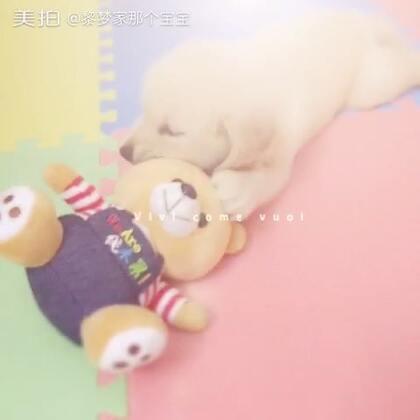 """#汪星人##晚安#睡前来一发😘名字取好了,叫""""宝宝"""",虽然名字比较大众,但是怎么顺口怎么叫,☺"""