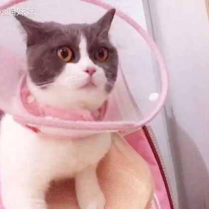 真是太尴尬了😳本喵愉快地等电梯😱结果岀来个光着膀子的大汉吓到我🙈哎呦妈呀,好害羞!🙈非礼勿视,我还是躲起来吧(视频昨天拍的)#宠物##袋子里的萌宠#