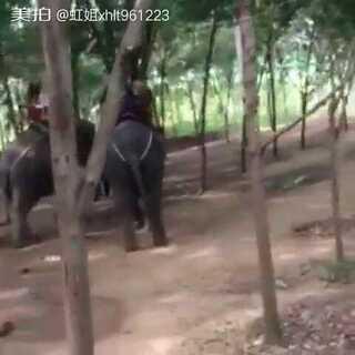 #逛拍##带着美拍去旅游##泰国之旅##泰国骑大象##热门#@美拍小助手
