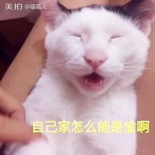 先赞后看哦 😂 喜欢就转发 这是一段考验猫语级别的视频 我的水平三级半 只能翻译大概意思了 哈哈哈 #家有猫狗猴系列剧# #宠物##搞笑##喵星人# 喵喵儿的店 http://e22a.com/h.0jnU7S?cv=AAKsoQtI&sm=ec358d