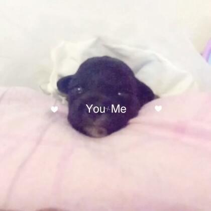 #宠物#黑妞公主驾到👰希望大家喜欢我呢😜小可爱们都睁眼睛了🙆叔叔阿姨哥哥姐姐们晚安😘😘