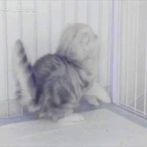 【vicky卷卷卷美拍】刚满月的萌喵宝宝😽😽😽可爱到爆...