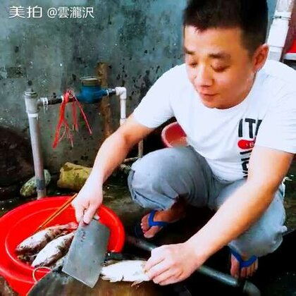 野生桂花鱼和胖头鱼
