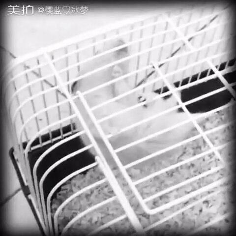 【咖啡狸猫奶茶兔美拍】#背影杀手大赛#呵呵嗒