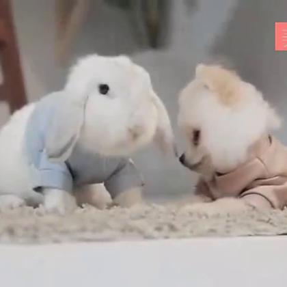 #宠物#泰国的人气萌狗狗MUJI和乖兔兔,卧槽,萌我一脸!😍
