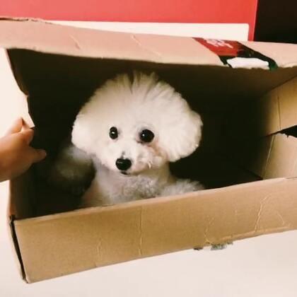 仔仔打包,包邮。🙈#我的宠物萌萌哒#
