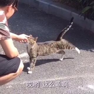 #搞笑# 吃午饭途中遇见一只超淡定的猫!!!!!我真的是一株行走的猫薄荷!!!😂#白眼先生##宠物#
